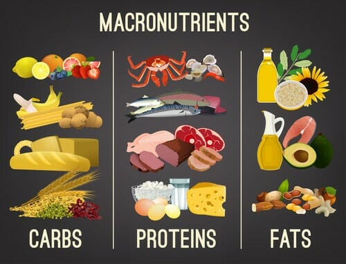 Importance of Macronutrients