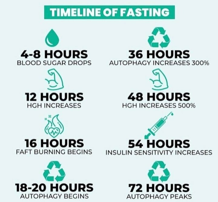 What happens to the body during Intermittent Fasting